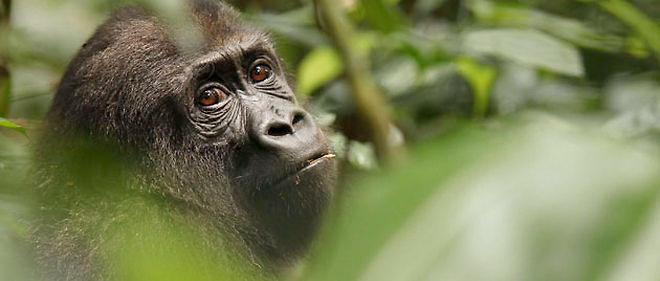 carnet de voyage le long du fleuve Congo